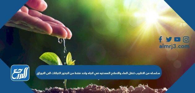 سلسله من الانابيب تنقل الماء والاملاح المعدنيه في اتجاه واحد فقط من الجذور النباتات الى الاوراق