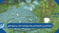 عملية النتح هي العملية التي يفقد فيها النبات الماء عن طريق الثغور