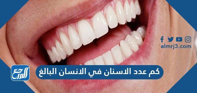 كم عدد الاسنان في الانسان البالغ