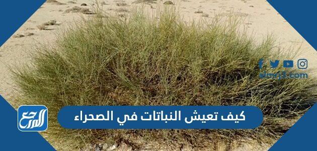 كيف تعيش النباتات في الصحراء