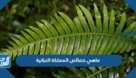 ماهي خصائص المملكة النباتية