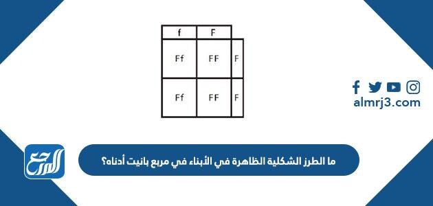 ما الطرز الشكلية الظاهرة في الأبناء في مربع بانيت أدناه؟