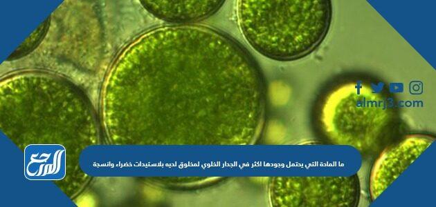 ما المادة التي يحتمل وجودها اكثر في الجدار الخلوي لمخلوق لديه بلاستيدات خضراء وانسجة