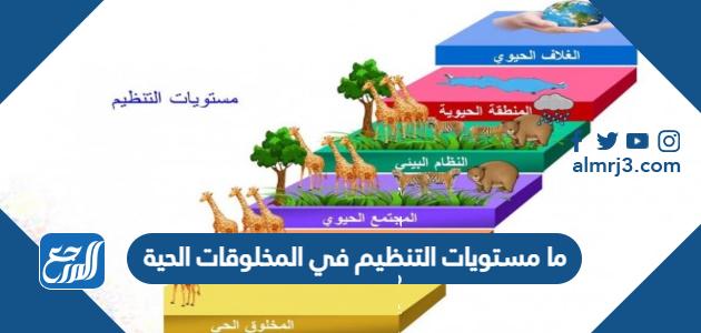 ما مستويات التنظيم في المخلوقات الحية