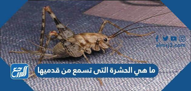 ما هي الحشرة التى تسمع من قدميها