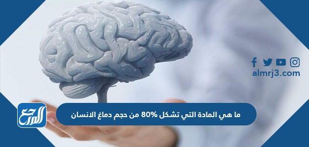 ما هي المادة التي تشكل 80% من حجم دماغ الإنسان