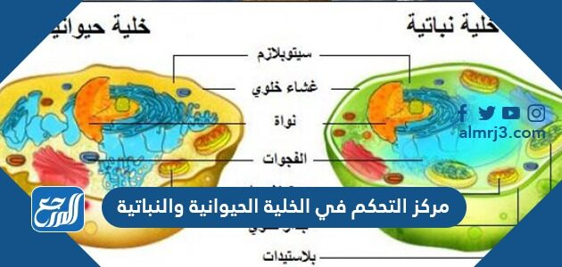مركز التحكم في الخلية الحيوانية والنباتية