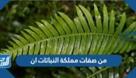 من صفات مملكة النباتات أن