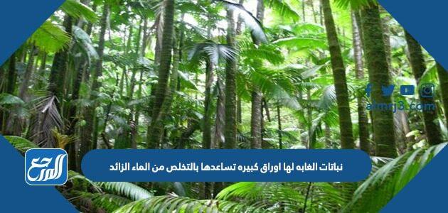 نباتات الغابه لها اوراق كبيره تساعدها بالتخلص من الماء الزائد