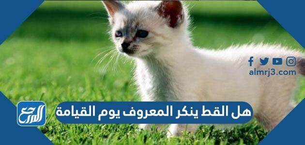 هل القط ينكر المعروف يوم القيامة