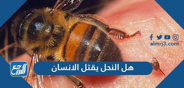 هل النحل يقتل الانسان