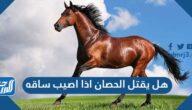 هل يقتل الحصان اذا اصيب ساقه