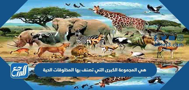هي المجموعة الكبرى التي تصنف بها المخلوقات الحية
