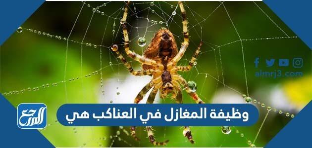وظيفة المغازل في العناكب هي