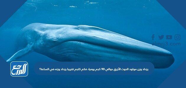 يزداد وزن مولود الحوت الأزرق حوالي ٩٠ كجم يوميا، فكم كلجم تقريبا يزداد وزنه في الساعة