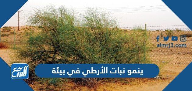 ينمو نبات الأرطي في بيئة