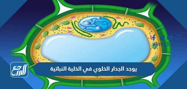 يوجد الجدار الخلوي في الخلية النباتية