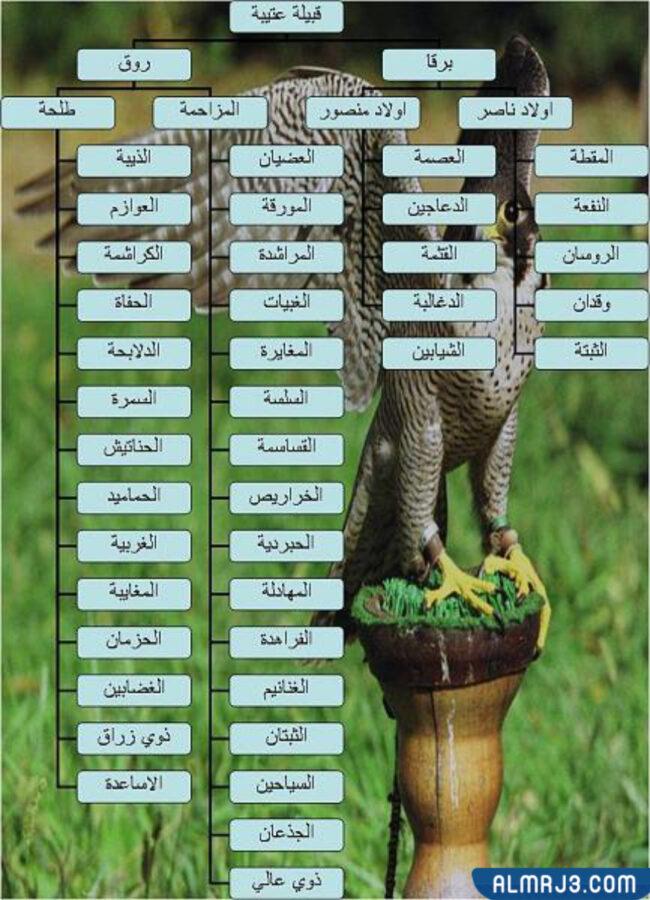 شجرة قبيلة عتيبة بالصور