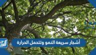 أسماء أشجار سريعة النمو وتتحمل الحرارة