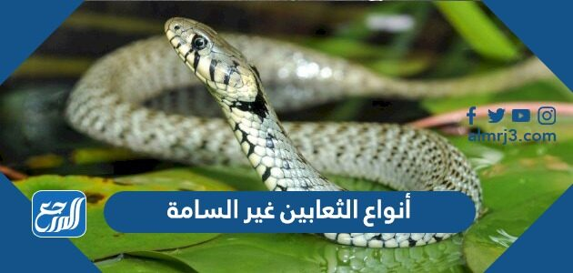 أنواع الثعابين غير السامة