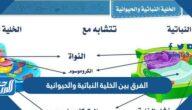 الفرق بين الخلية النباتية والحيوانية