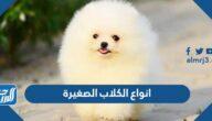 انواع الكلاب الصغيرة واسمائها بالصور