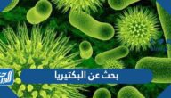 بحث عن البكتيريا كامل