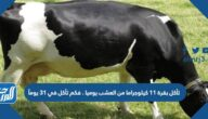 تأكل بقرة ١١ كيلوجراما من العشب يوميا . فكم تأكل في ٣١ يومآ