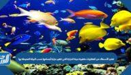 تعتبر الأسماك من الفقاريات متغيرة درجة الحرارة التي تتغير حرارة أجسامها حسب البيئة المحيطة بها