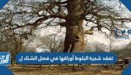 تفقد شجرة البلوط أوراقها في فصل الشتاء ل