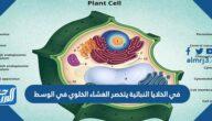 في الخلايا النباتية يتخصر الغشاء الخلوي في الوسط