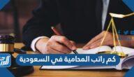 كم راتب المحامية في السعودية