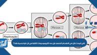 لكي لايحدث خلل في الانقسام المنصف فإن عدد الكروموسومات الناتجة في كل خلية جنسية عادة ؟