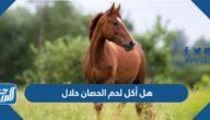 هل أكل لحم الحصان حلال