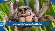 هل العنكبوت من الحشرات