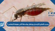 يسبب الملاريا للإنسان وينتقل بواسطة أنثى بعوضة الإنفلس؟